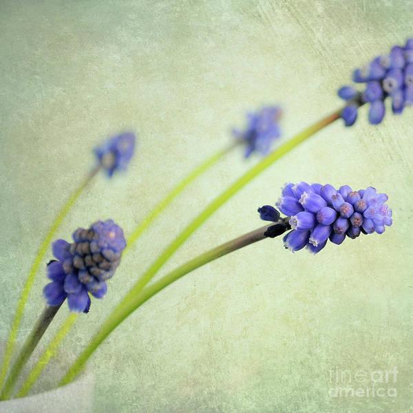 Wall Art - Photograph - Hyacinth Grape by Lyn Randle