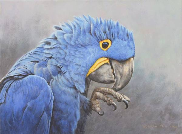 Painting - Hyacinth Macaw by Alan M Hunt