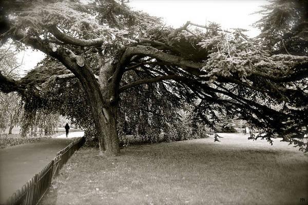 Photograph - Hyde Park Run by John Meader