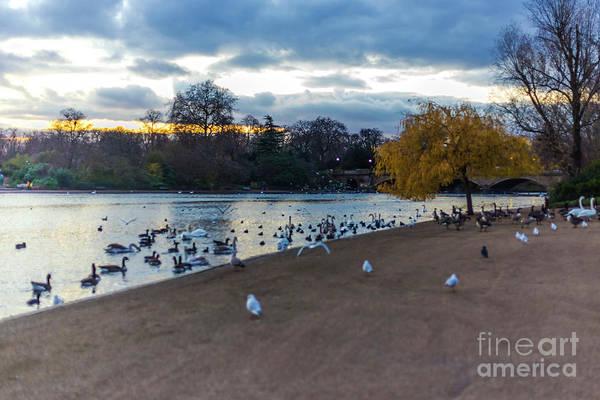 Wall Art - Photograph - Hyde Park Sunset London 2 by Alex Art and Photo