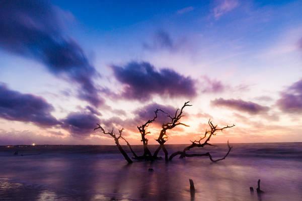 Photograph - Hydra Of Driftwood Beach by Chris Bordeleau