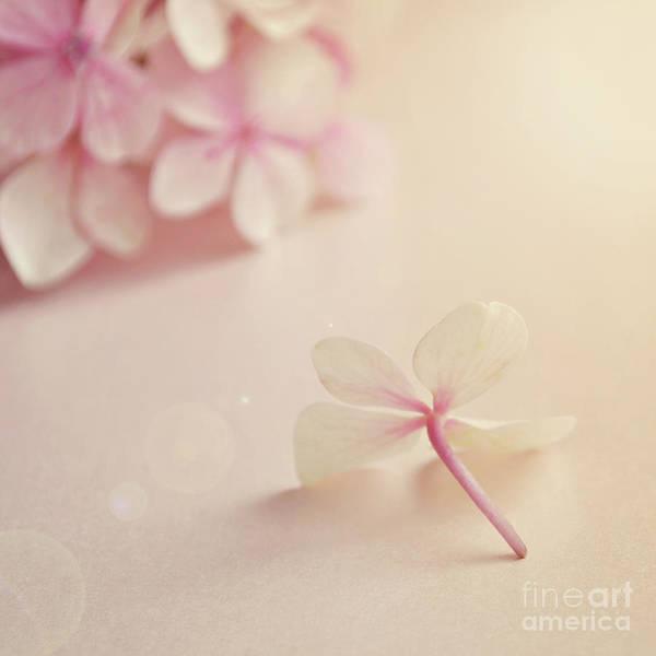 Wall Art - Photograph - Hydrangea Flower by Lyn Randle