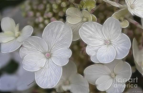 Mixed Media - Hydrangea Fractalius by Deborah Benoit
