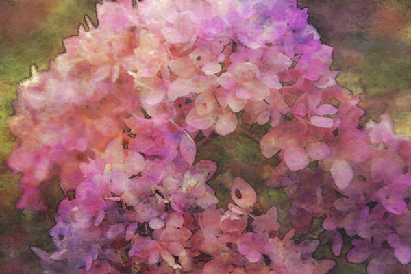 Photograph - Hydrangea Impression 4253 Idp_2 by Steven Ward