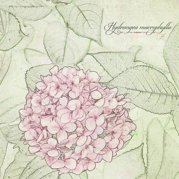 Digital Art - Hydrangea Macrophylla by Gina Harrison