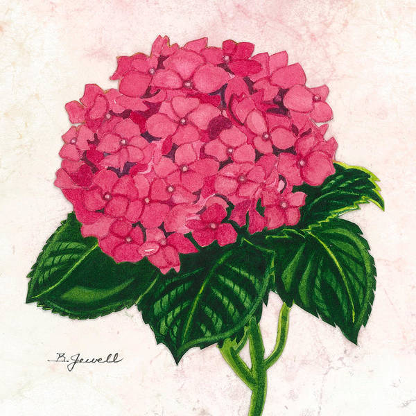 Wall Art - Painting - Hydrangea-perfectly Pink by Barbara Jewell