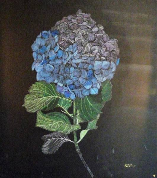 Painting - Hydrangea by Richard Le Page