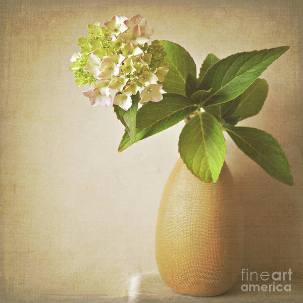 Wall Art - Photograph - Hydrangea With Leaves by Lyn Randle