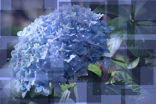 Photograph - Hydrangea5 by Donna Bentley