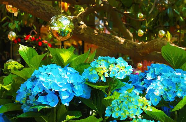 Photograph - Hydrangeas At Utica Square by Susan Vineyard
