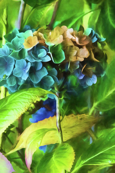 Wall Art - Painting - Hydrangeas by Bonnie Bruno