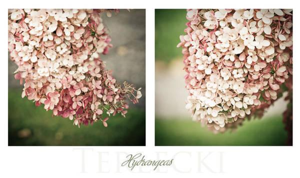 Hydrangea Photograph - Hydrangeas Diptych by Maggie Terlecki
