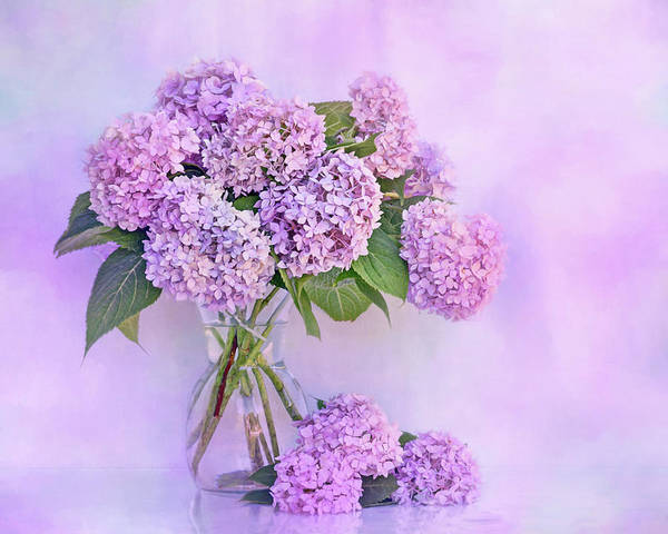 Wall Art - Photograph - Hydrangeas In Blue And Pink by Nikolyn McDonald
