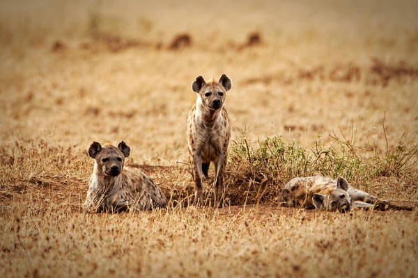 Photograph - Looking For Mischief by John  Nickerson