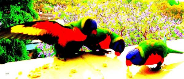 Photograph - Hyper Parakeets by VIVA Anderson
