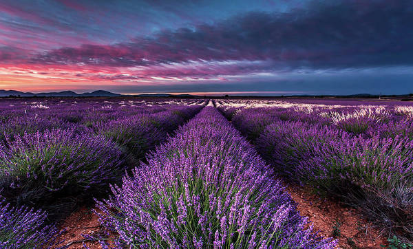 Photograph - Hypnosis by Jorge Maia