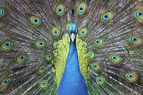 Photograph - Hypnotic by Eilish Palmer