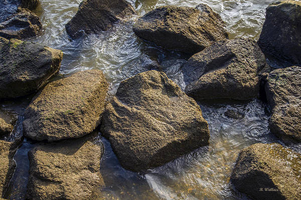 Clear Coat Wall Art - Photograph - I Am A Rock by Brian Wallace