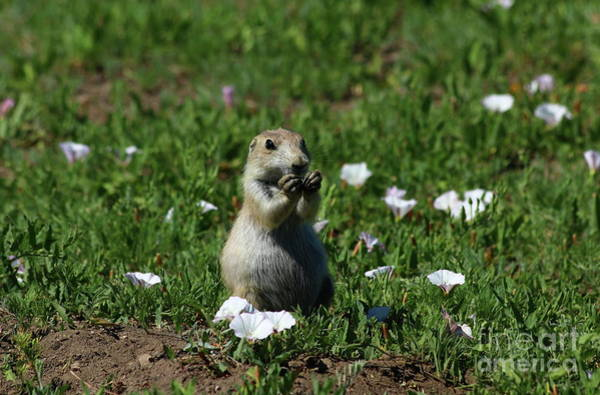 Marmot Photograph - I Am Always Looking Great by Christiane Schulze Art And Photography