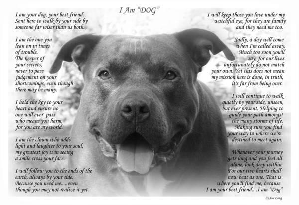 Wall Art - Photograph - I Am Dog by Sue Long