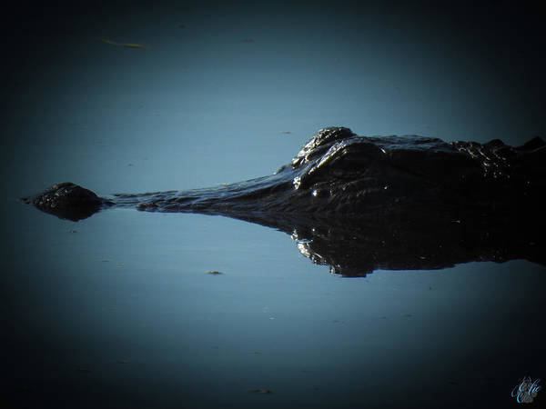 Photograph - I Am Gator, No. 117 by Elie Wolf
