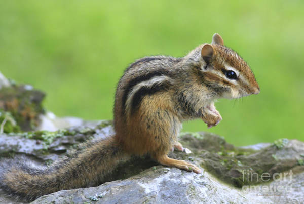 Chirping Photograph - I Am Just So Cute by Deborah Benoit