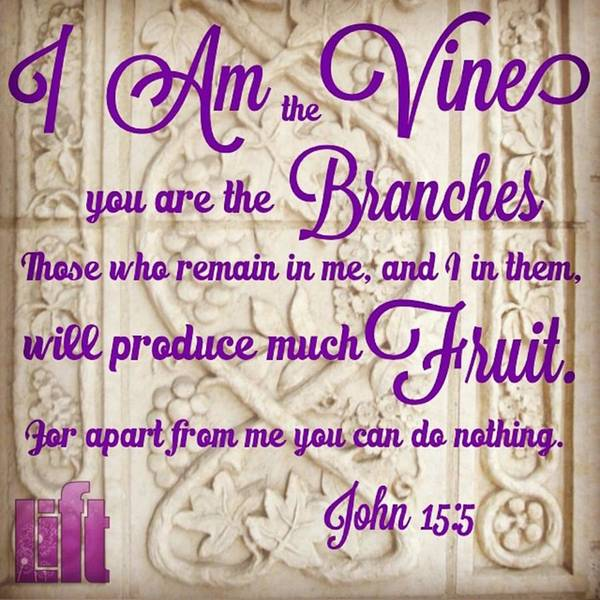 """Design Wall Art - Photograph - """"i Am The True Grapevine, And My by LIFT Women's Ministry designs --by Julie Hurttgam"""