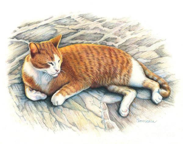 Tabby Drawing - I Am Tiger by Catherine Garneau