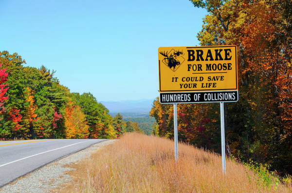 Ossipee Wall Art - Photograph - I Brake For Moose - Ossipee New Hampshire by Bill Cannon