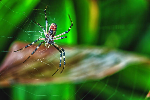 I Do Like Spiders And Snakes Art Print
