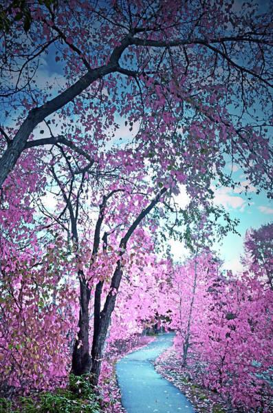 Photograph - I Dream In Pink 2 by Tara Turner