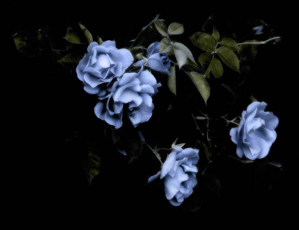 Digital Art - I Dream Of Roses by JGracey Stinson
