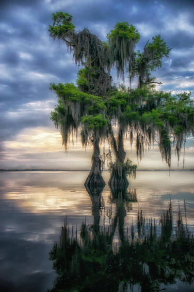 Photograph - I Dreamed Of Cypress by Ghostwinds Photography