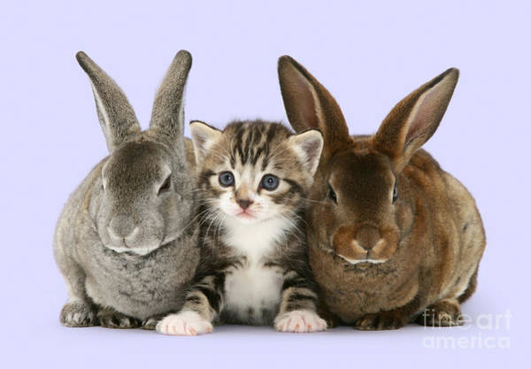 Photograph - I Feel Like A Bunny Sandwich by Warren Photographic