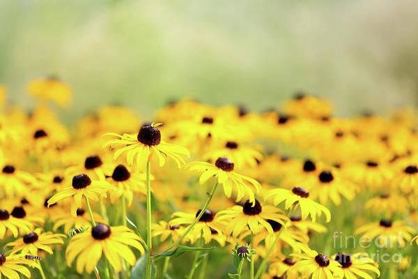 Photograph - I Got Sunshine by Beve Brown-Clark Photography
