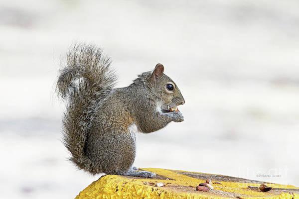 Photograph - I Have My Nuts by Deborah Benoit