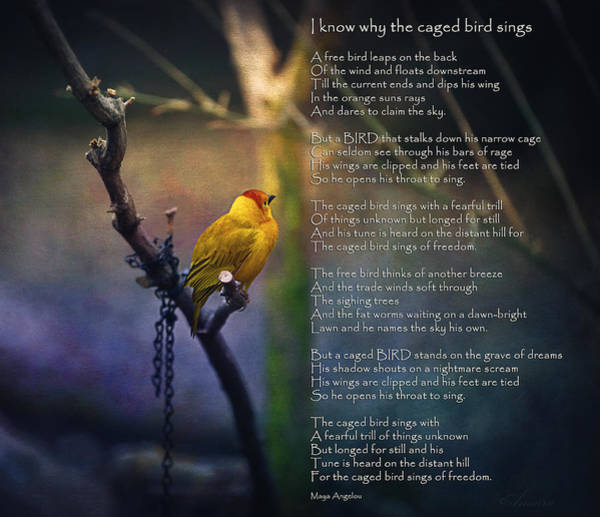 Quotation Photograph - I Know Why The Caged Bird Sings By Maya Angelou by Maria Angelica Maira