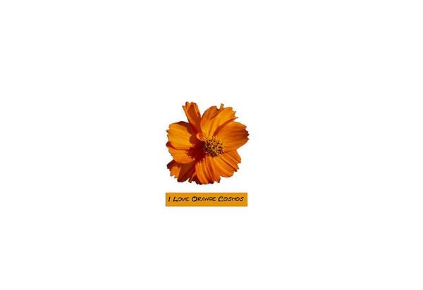 Wall Art - Photograph - I Love Orange Cosmos 2018-1 by Thomas Young