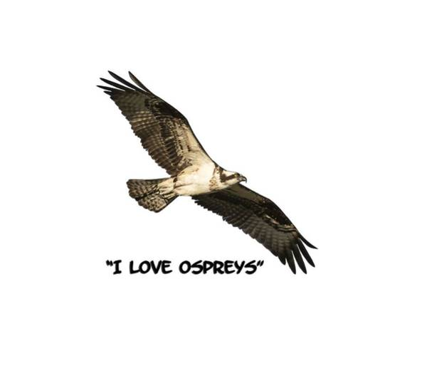 Photograph - I Love Ospreys 2016-1 by Thomas Young