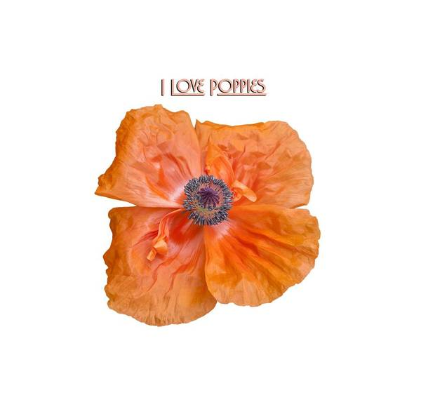 Wall Art - Photograph - I Love Poppies by Thomas Young