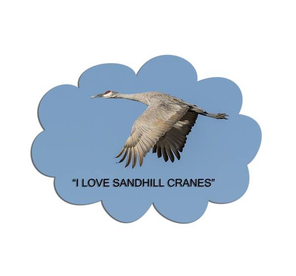 Photograph - I Love Sandhill Cranes by Thomas Young