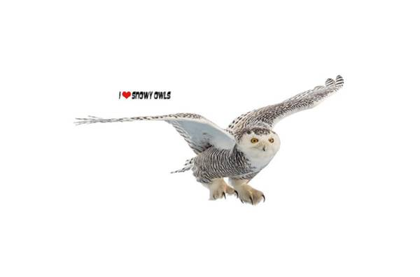 Hoodies Photograph - I Love Snowy Owls T-shirt by Everet Regal