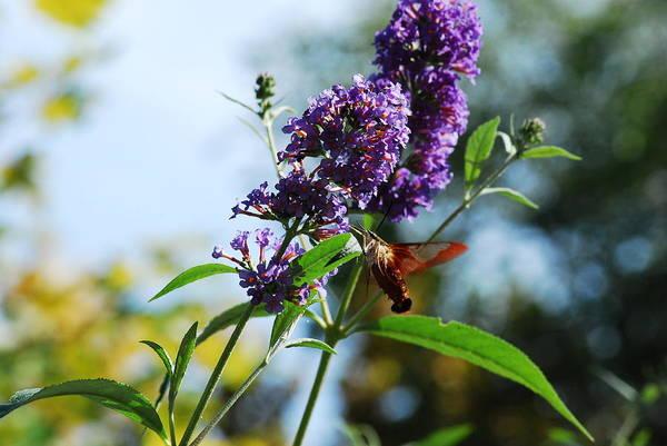 Photograph - I Love The Purple Ones by Lori Tambakis