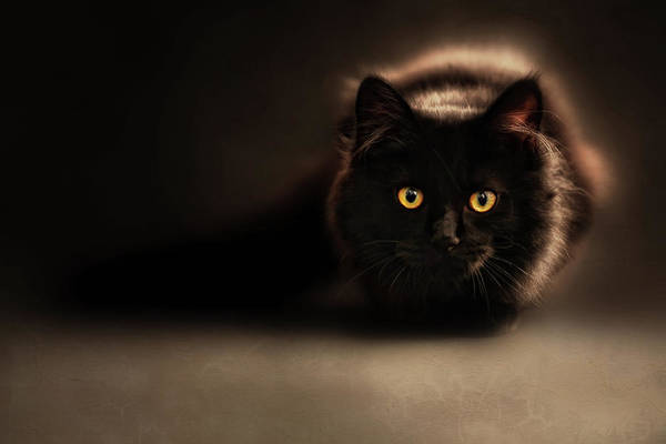 Long Hair Cat Photograph - I Love To Pounce And Scratch Your Feet Cat Art by Georgiana Romanovna