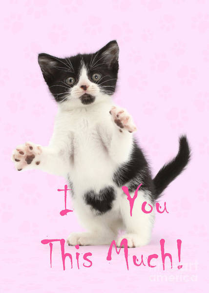Photograph - I Love You This Much Valentine Kitten by Warren Photographic