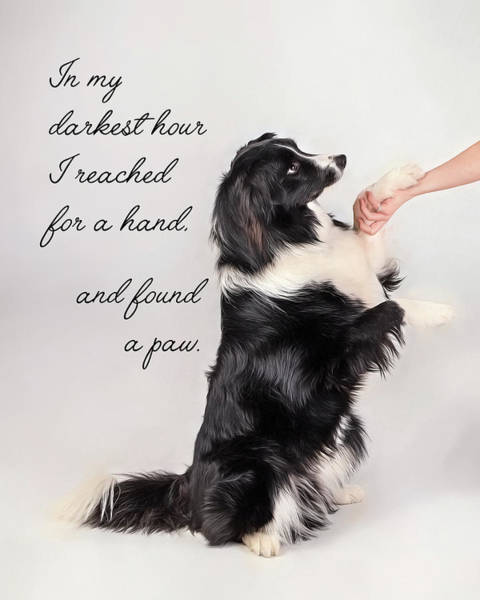 Pet Care Photograph - I Reached Fora Hand by Pat Eisenberger