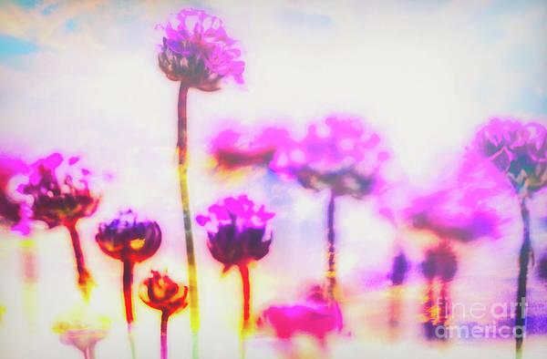 Plumbaginaceae Photograph - I Rise by Jean OKeeffe Macro Abundance Art