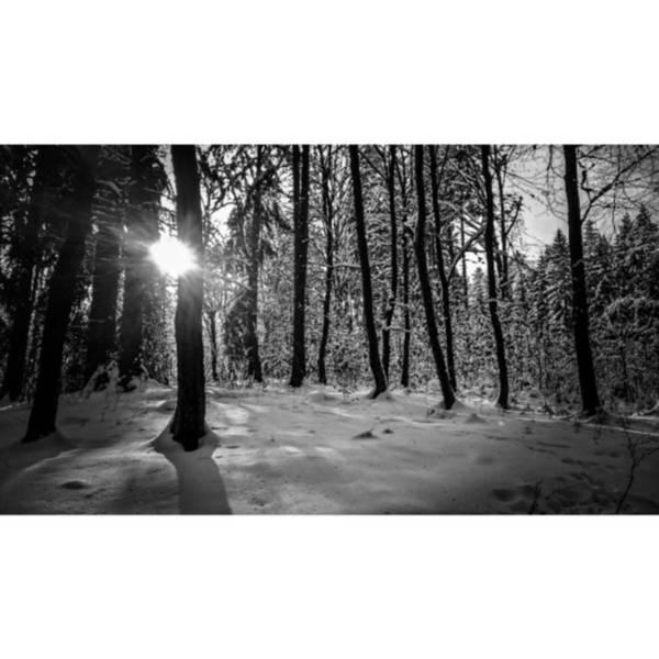 Monochrome Photograph - I Saw It.#bnw #monochrome #forest by Mandy Tabatt