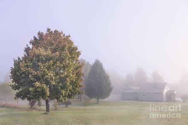 Early Wall Art - Photograph - I Scent The Morning Air by Evelina Kremsdorf