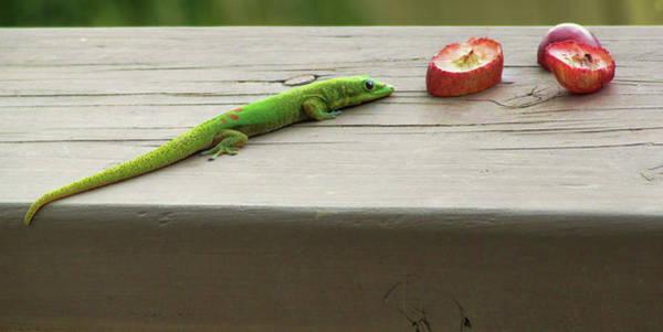 Photograph - I See Grapes by Pamela Walton